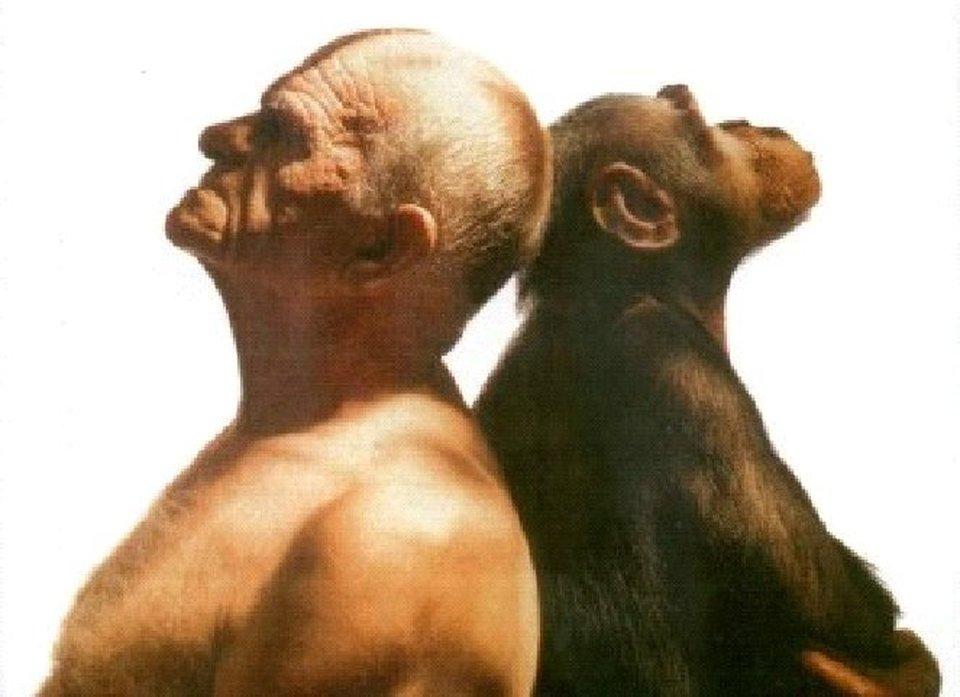 osso nel pene del primate