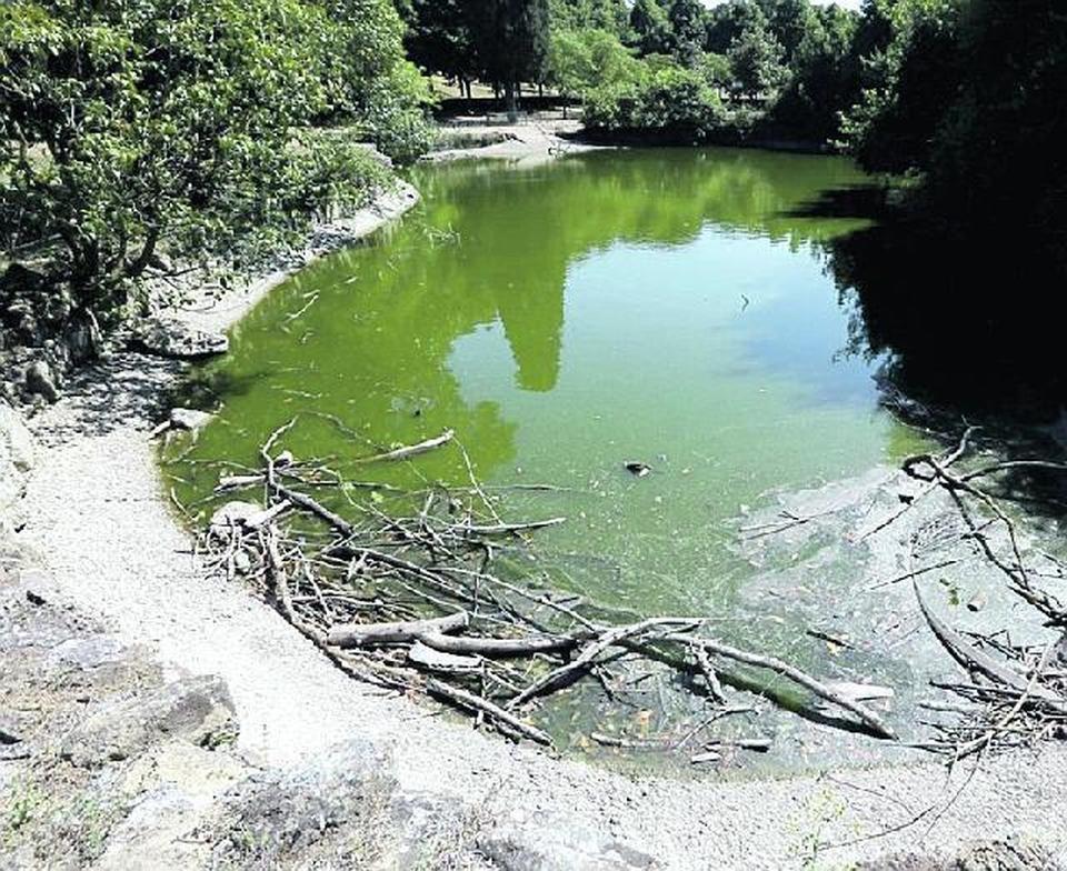 Villa ada il laghetto a secco tartarughe e carpe in agonia for Tartarughe laghetto