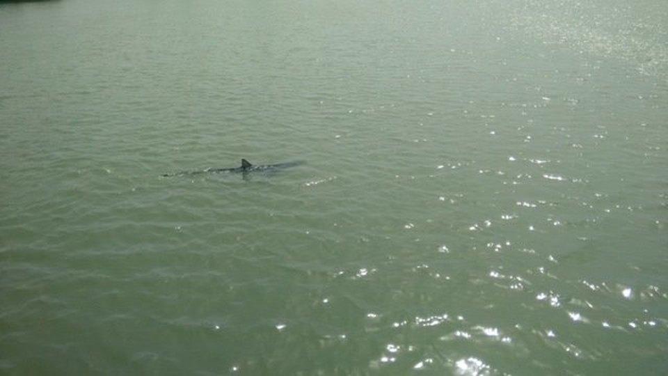 Ostia, uno squalo nuota nelle acque del Tevere Paura tra i diportisti di Fiumara Grande