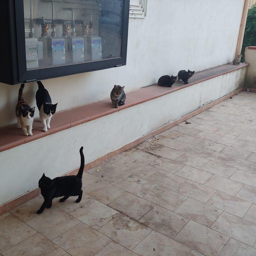 Rete Per Gatti Condominio gatti murati vivi in un condominio, la denuncia degli