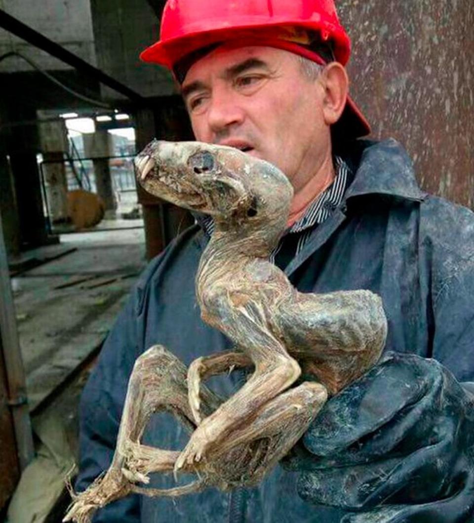 Siberia, mummia misteriosa trovata in miniera di diamanti: è simile a un dinosauro