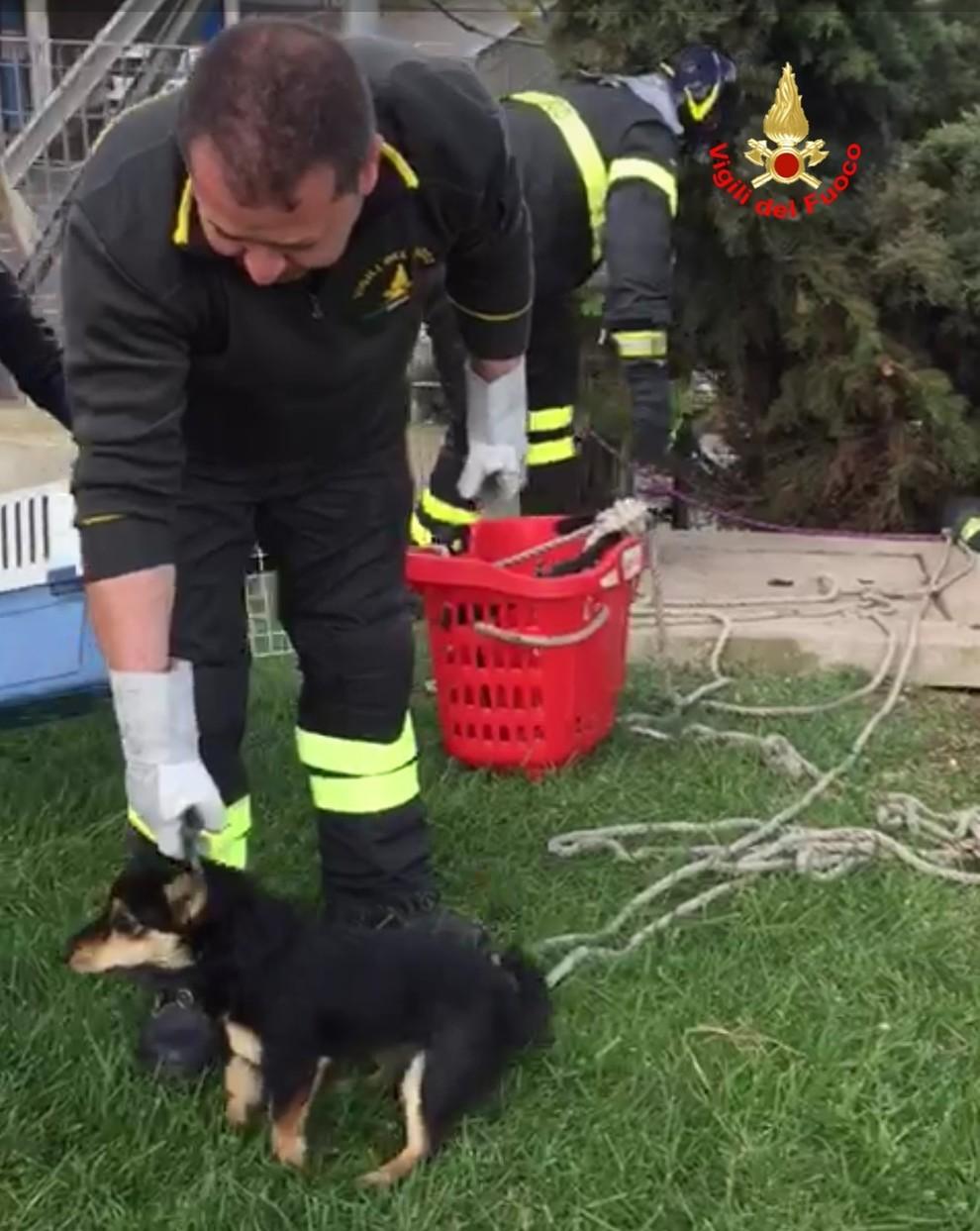Cuccioli Di Cane Finiscono In Una Cavità Profonda 7 Metri Salvati
