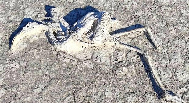 Uno dei migliaia di fenicotteri uccisi dalla siccità (immag pubbl su Instagram dall'ambientalista e fotografo Fahri.Tunc)