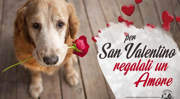 """""""Per San Valentino regalati un amore"""", la campagna dell'Associazione amici del cane"""