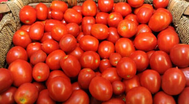 Livorno, truffa agroalimentare in uno stabilimento di pomodori del gruppo Petti