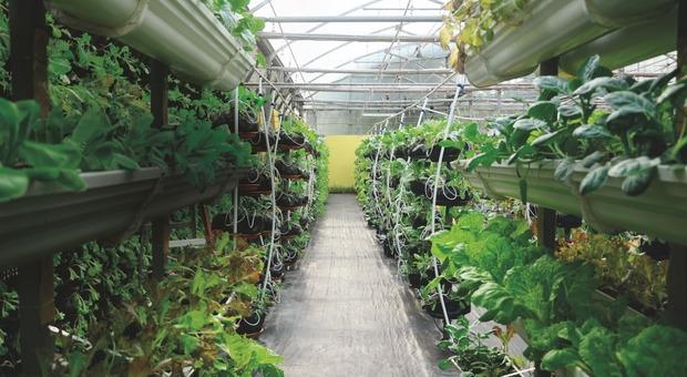 Aumentano le fattorie verticali, una crescita media annua del 24,6%