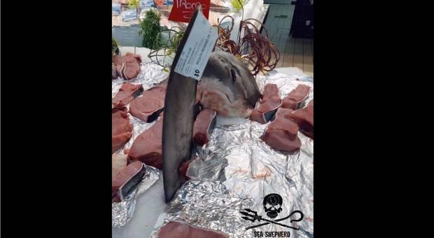 Squalo volpe in vendita al supermercato, le proteste: «È specie a rischio estinzione»
