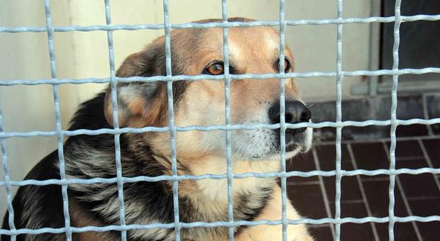 Roma, rapisce cane e chiede il riscatto: «Dammi 100 euro o lo rivendo»