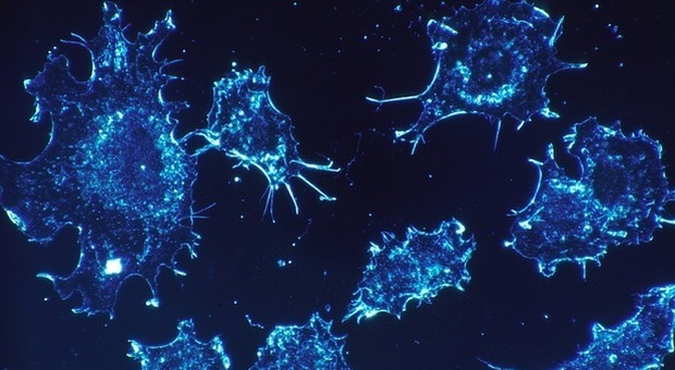 Tumori, nuova frontiera dello spazio. «Cellule killer muoiono a gravità zero»