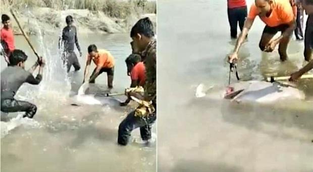 Il delfino bastonato a morte (immag pubbl da India Today su fb)