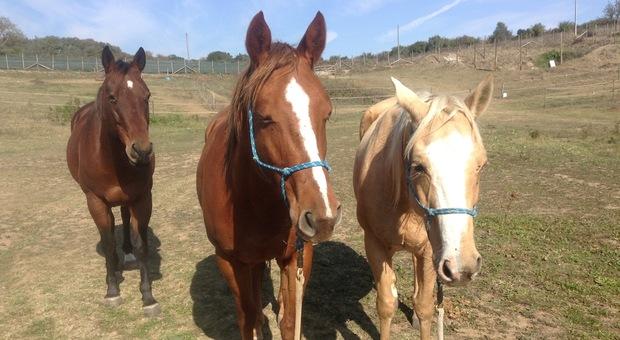 Grecia, addio alla carne di cavallo. «Stop alla macellazione, equiparati a cani e gatti»