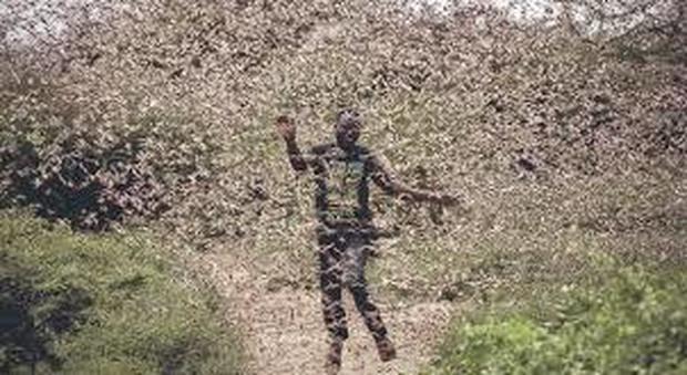 Invasione delle locuste. La Cina si prepara a combatterle schierando 100mila anatre (immag pubbl da Il Messaggero)