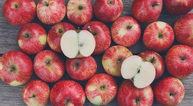 Salute, due mele al giorno (per 8 settimane consecutive) abbassano il rischio colesterolo