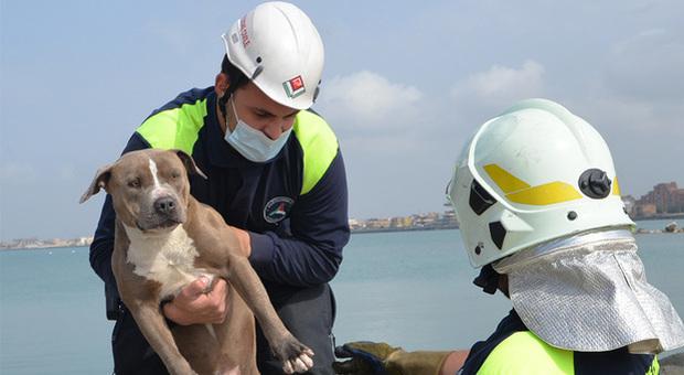 Fiumicino, cucciolo di pitbull rischia di affogare in mare: salvato dalla Protezione civile
