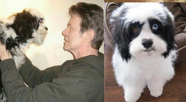 Morto Max, l'adorato cagnolino di David Bowie che aveva gli occhi come lui. (Immag da David Bowie e @p0odle_ su Instagram)