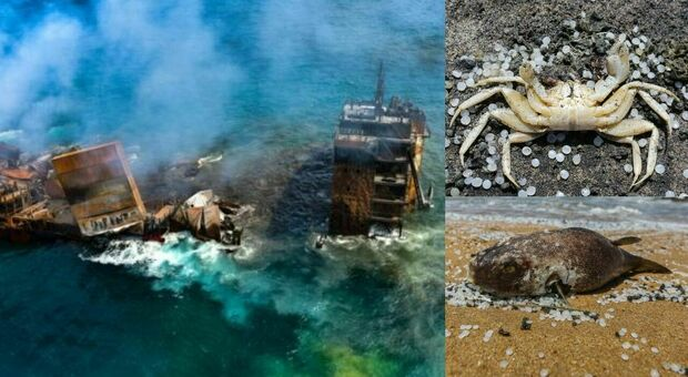 Sri Lanka, nave dei veleni affonda: strage di pesci e tartarughe. «Disastro ambientale»