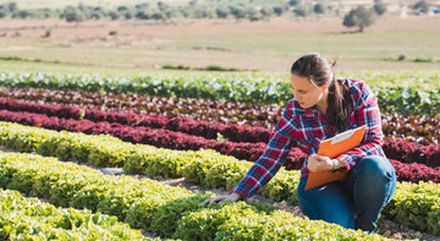 Paola: «Ero cameriera in hotel ora raccolgo fragole nei campi»