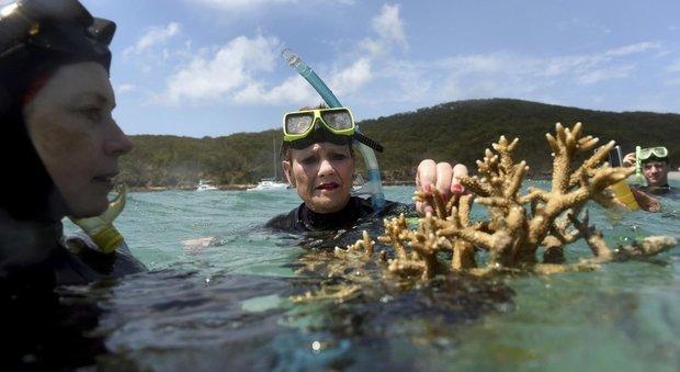 Australia, l'acqua è troppo calda: un terzo della barriera corallina è sbiancata