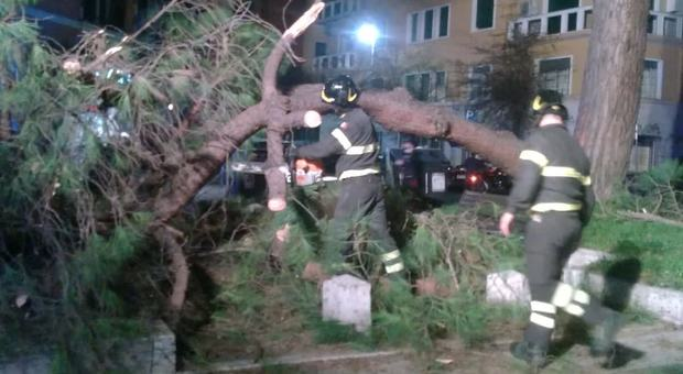Roma, pino si spezza e crolla sulle strisce pedonali: nessun ferito, ma traffico bloccato