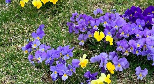 fiori del parco