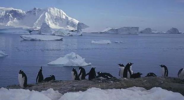 Caldo record in Antartide, temperatura a 20,7 gradi. Il ricercatore: mai accaduto finora