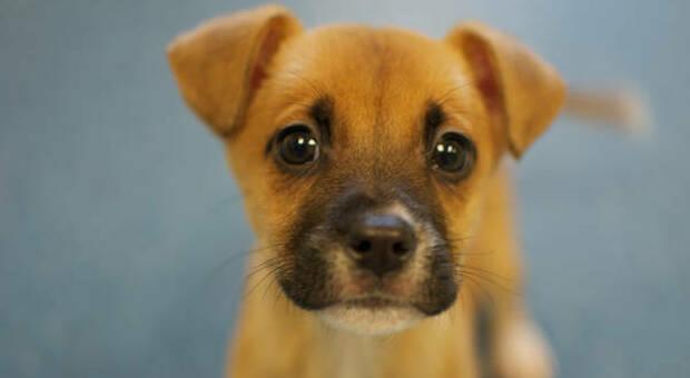 Cuccioli acquistati durante il lockdown e rimessi in vendita a prezzi stracciati: proteste delle associazioni