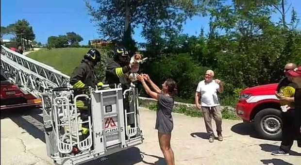 Il cane Pablo sale su un albero per 10 metri: salvato dai vigili del fuoco