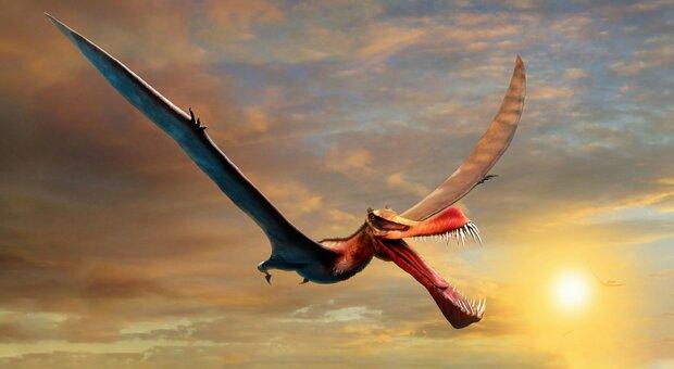 """Il """"drago"""" che volava sull'Australia 105 milioni di anni fa"""
