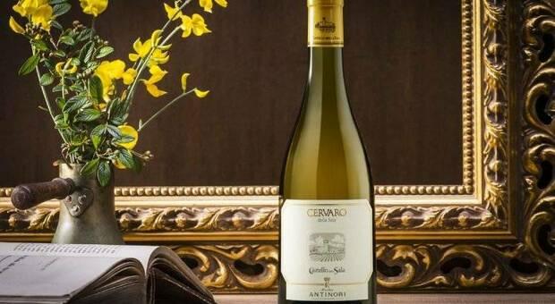 Il Cervaro della Sala Antinori eletto miglior bianco d'Italia nella «Top 100 Italian White Wines for the Summer»