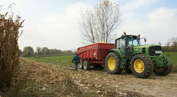 Un'azienda agricola