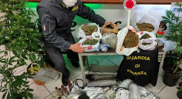 Coltivatore di marijuana con reddito di cittadinanza, scatta l'arresto