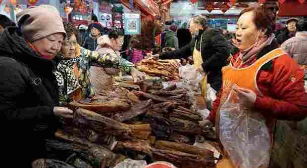 Virus, svolta a Wuhan: vietati caccia e consumo di carne di animali selvatici per 5 anni