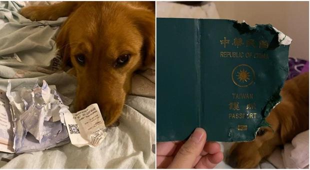 Coronavirus, il cane mangia il passaporto e lei non parte per Wuhan: «Cercava di proteggermi»