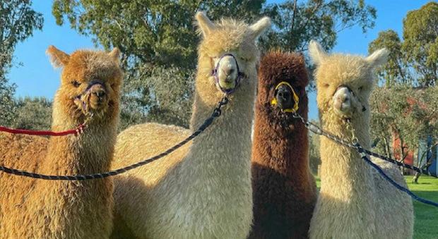Piani degli Alpaca (foto di Piani degli Alpaca)