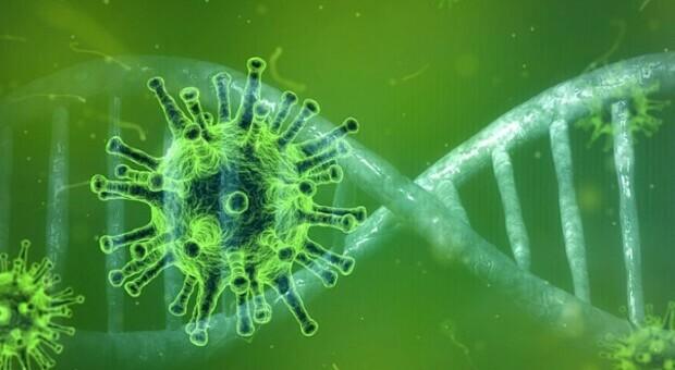 Covid, trovati nel Dna i rischi di sviluppare la malattia: il maxi-studio mondiale su 50.000 persone
