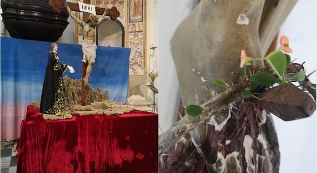 A Ponza la corona di spine del crocifisso fiorisce, il parroco: «Un segnale di speranza»