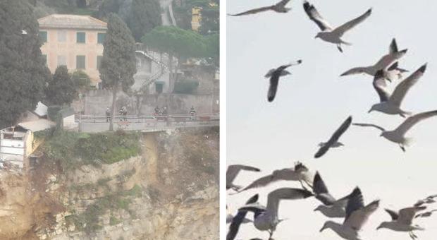 Camogli, i gabbiani fanno scempio delle salme precipitate in mare, una bara arriva fino a Genova