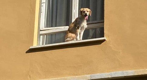 Il cagnolino abbandonato sul davanzale a Perugia