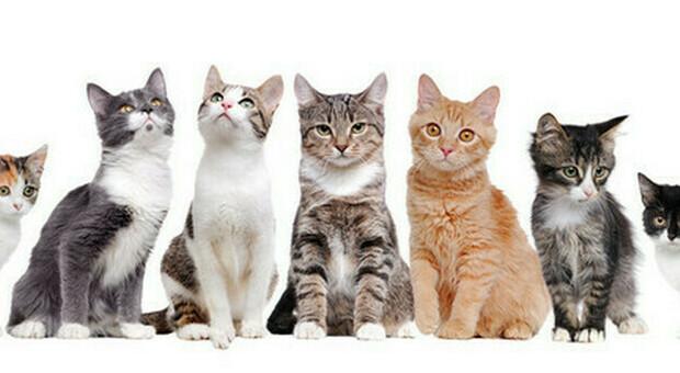 Covid, l'altra faccia della pandemia, migliaia di gatti orfani, parte campagna per l'adozione