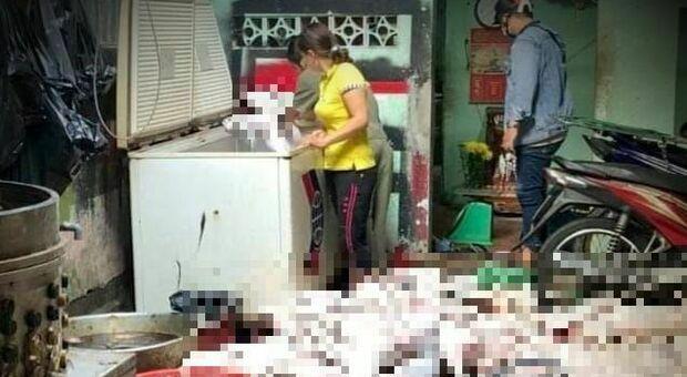 Cani macellati pronti per essere cucinati: scoperta casa degli orrori in Vietnam