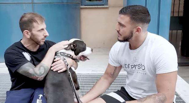 Un video dei campioni del ring contro l abbandono dei cani