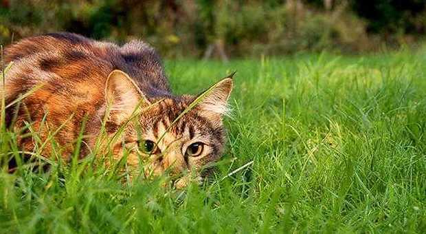 Orrore a Bari, il tagliaerba non vede i gattini durante lo sfalcio: strage nel giardino nel comunale