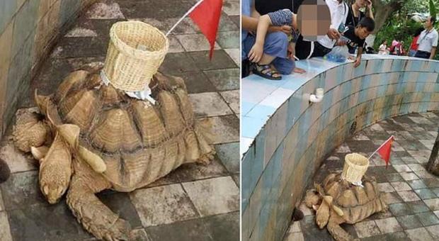 Le immagini della tartaruga riprese da un visitatore dello zoo e pubblicate da All India Roundup