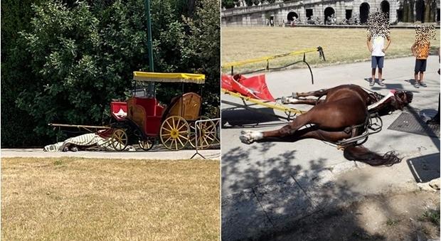Reggia di Caserta, cavallo muore di caldo e fatica. Ira animalisti, bufera sulle botticelle