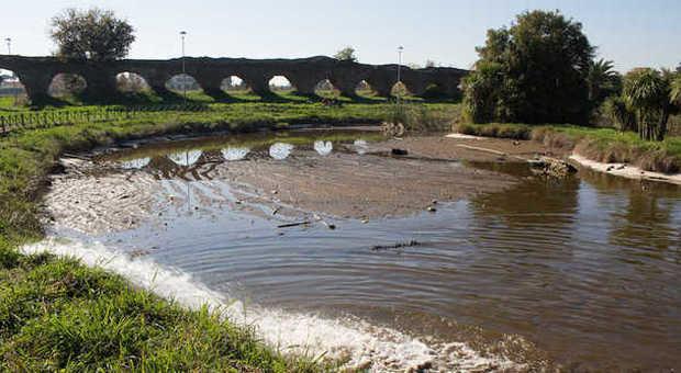 Tor tre teste pesci e tartarughe rischiano di morire nel for Lago tartarughe