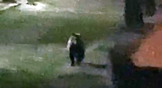 L'orso filmato tra i vicoli a Civita D'Antino: tre avvistamenti in un mese