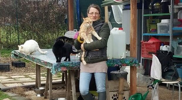 Foligno, l'appello dell'Oasi Felina: «Aiutateci a sostenere i gatti abbandonati e gravemente malati»