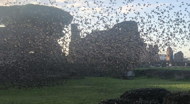 Roma, coniglietti, ricci e germani reali: i nuovi inquilini del parco del Colosseo