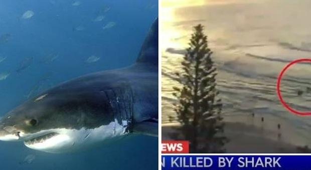 Australia, squalo bianco uccide surfista sulla Gold Coast: spiagge chiuse