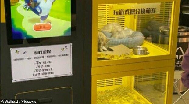 I cuccioli nella game machine al centro commerciale cinese denunciati dalla modella Ju Xiaowen